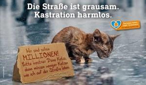 Motiv_Katzenkastration-600x351